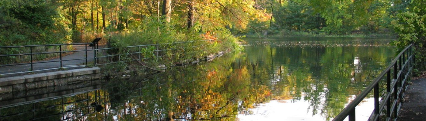 Pond in Brooklyn